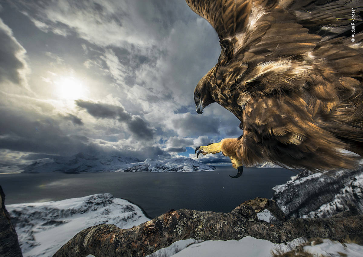 "Audun Rikardsen's stunning shot, ""Land of the Eagle,"" landed him a spot in the touring Wildlife Photographer of the Year exhibit, opening Feb. 14 at the Royal B.C. Museum. Photo by Audun Rikardsen"